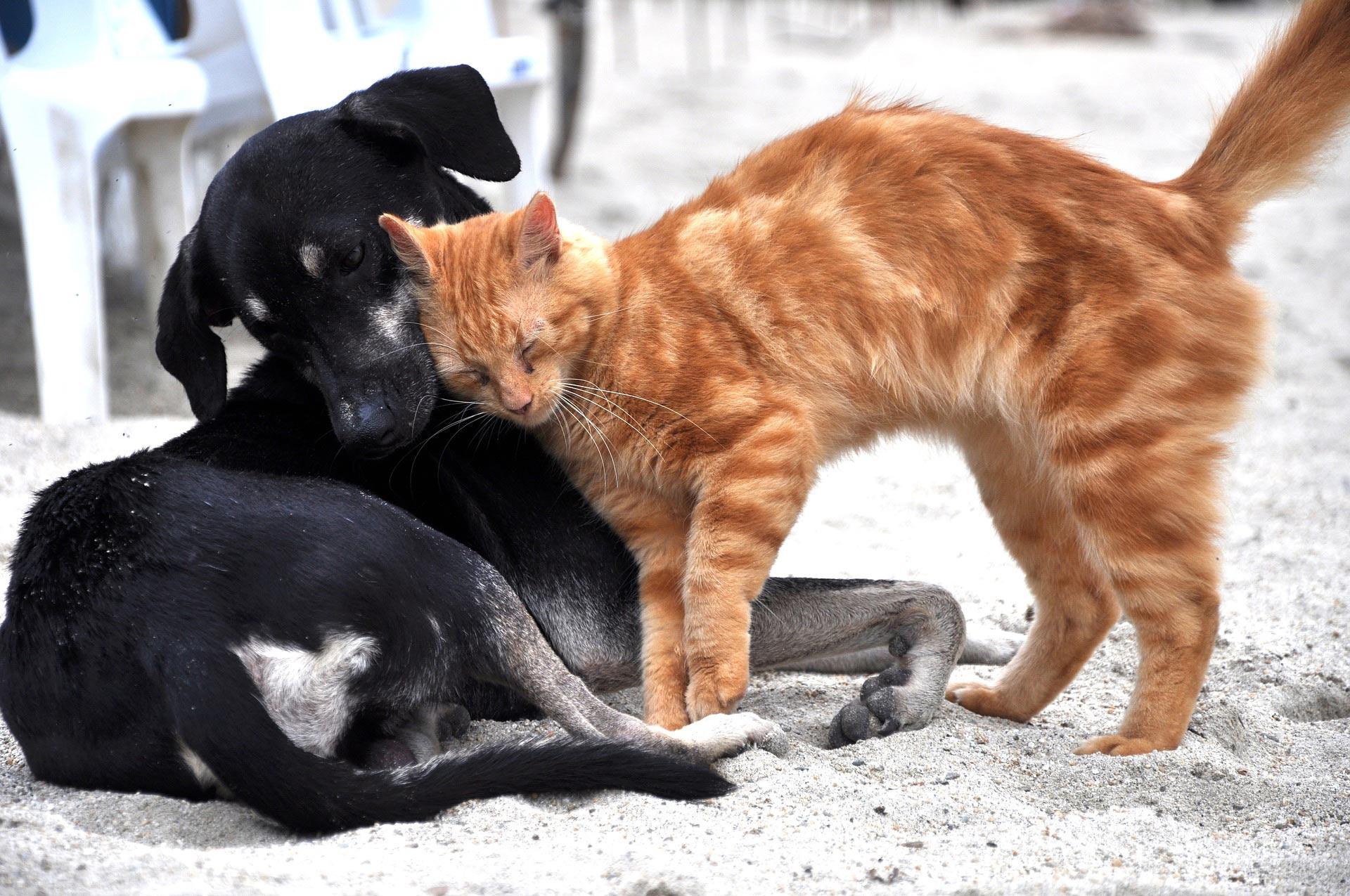 Przeprowadzka ze zwierzętami